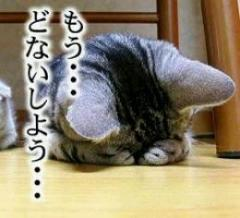 Donaishiyou_2